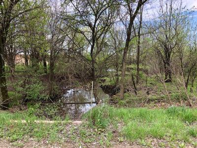 312 Acres Moran (2)