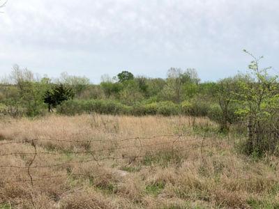 312 Acres Moran (4)