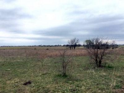 860 Acres Bourbon Co (13)