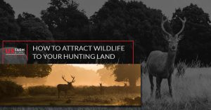 How To Attract Wildlife to Your Hunting Land